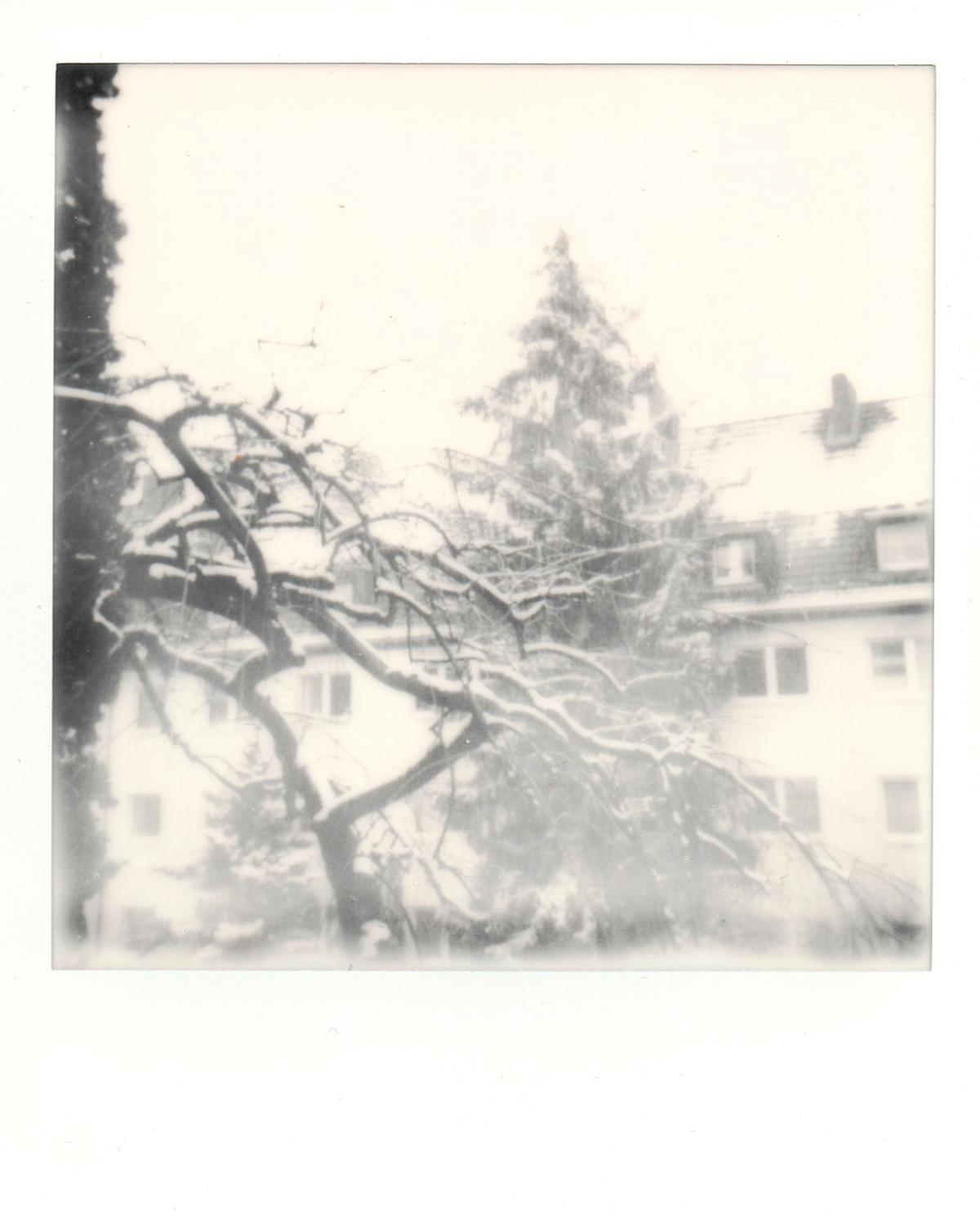 Ein schwarz-weiß-Polaroid von einem verschneiten Hinterhof mit Bäumen